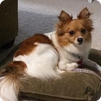 Adopt A Pet :: Tia - Potomac, MD
