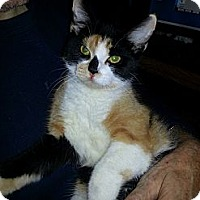Adopt A Pet :: AUTUMN - West Lafayette, IN