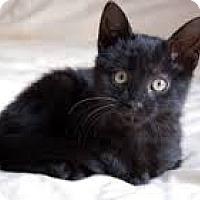Adopt A Pet :: Larry - Lancaster, MA