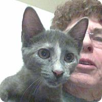 Adopt A Pet :: Lilac - Scottsdale, AZ