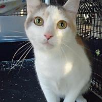 Adopt A Pet :: Little Ann - Speedway, IN