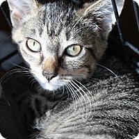 Adopt A Pet :: Eliza - Medina, OH
