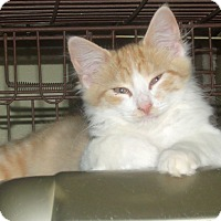 Adopt A Pet :: MOZART - Acme, PA