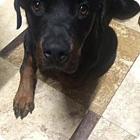 Adopt A Pet :: ELLIOT - Gilbert, AZ