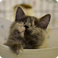 Adopt A Pet :: Matilda - Byron Center, MI
