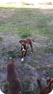 Australian Shepherd Mix Dog for adoption in McCurtain, Oklahoma - Emily