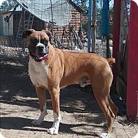 Adopt A Pet :: Sam - Pie Town, NM