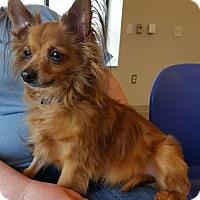 Adopt A Pet :: Bucky - Columbus, OH