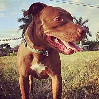 Adopt A Pet :: Jayna (courtesy gillian) - Homestead, FL