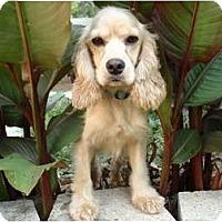 Adopt A Pet :: Bowie - Sugarland, TX