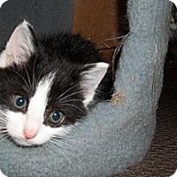 Adopt A Pet :: Rocky - Acme, PA