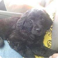 Adopt A Pet :: Rocky - spring valley, CA