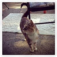 Adopt A Pet :: Fiona - Alamo, CA