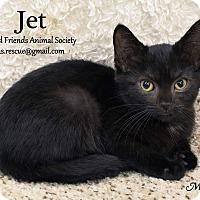Adopt A Pet :: Jet - Ortonville, MI