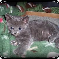 Adopt A Pet :: COOKIE - And just as sweet!! - South Plainfield, NJ
