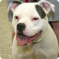 Adopt A Pet :: Annie - Norfolk, NE