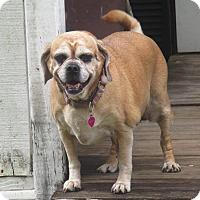 Adopt A Pet :: MISSY - Jacksonville, FL