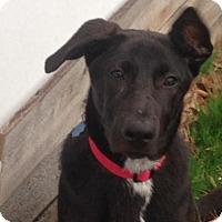 Adopt A Pet :: Brooke - Greeneville, TN