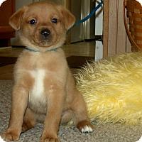 Adopt A Pet :: SAMMY/ADOPTED - Waterbury, CT