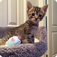 Adopt A Pet :: Suki - Boynton Beach, FL