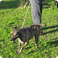 Adopt A Pet :: Dana - Salem, NH