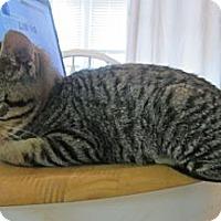 Adopt A Pet :: Brutus - Bunnell, FL