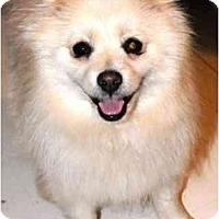 Adopt A Pet :: Blondie (Adopted!!) - Houston, TX