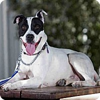 Adopt A Pet :: Spot - Cheyenne, WY