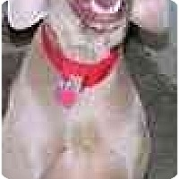Adopt A Pet :: Buddy - Eustis, FL
