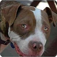 Adopt A Pet :: Bridget - Portland, OR