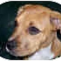 Adopt A Pet :: Sundae - Sunderland, MA