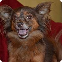 Adopt A Pet :: Harriette - Homewood, AL