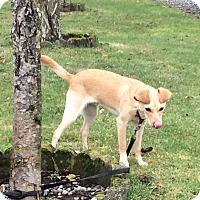 Adopt A Pet :: Reagan - Surrey, BC