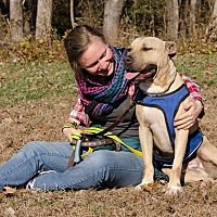 Boxer Mix Dog for adoption in Midlothian, Virginia - George 2015