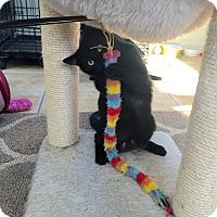 Adopt A Pet :: SIMON - Hamilton, NJ