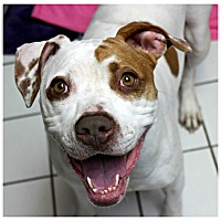 Adopt A Pet :: Angie - Forked River, NJ