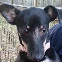 Adopt A Pet :: Sue Ellen - Newnan, GA