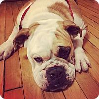 Adopt A Pet :: Florence Foster Jenkins - Park Ridge, IL