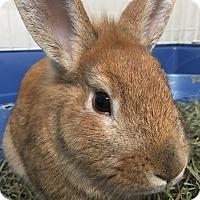 Adopt A Pet :: Eros - Edinburg, PA