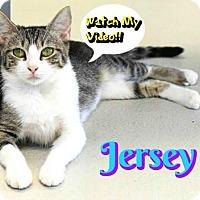 Adopt A Pet :: Jersey - Sarasota, FL