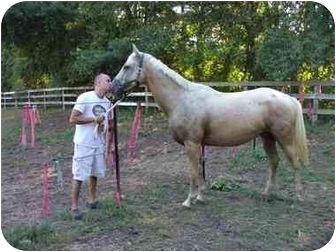 Quarterhorse Mix for adoption in Northford, Connecticut - Patch