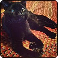 Adopt A Pet :: Khan - Eldora, IA