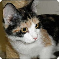 Adopt A Pet :: Jayden - Milwaukee, WI