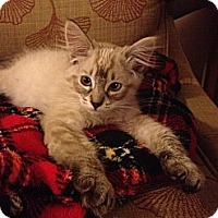 Adopt A Pet :: Sugar - Lake Forest, CA