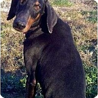 Adopt A Pet :: Ally--adopted!! - New Richmond, OH