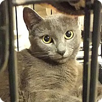 Adopt A Pet :: Mikka - Santa Monica, CA