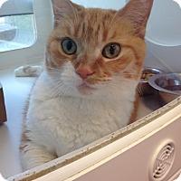 Adopt A Pet :: MINKY - Madison, AL