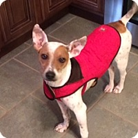 Adopt A Pet :: Ava - Marietta, GA