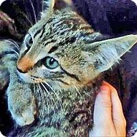 Adopt A Pet :: Smoke - McDonough, GA