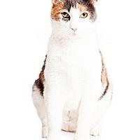 Adopt A Pet :: Daiquiri - Tempe, AZ